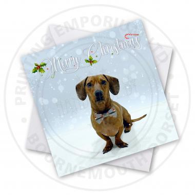 Christmas Dachshund Greetings Card